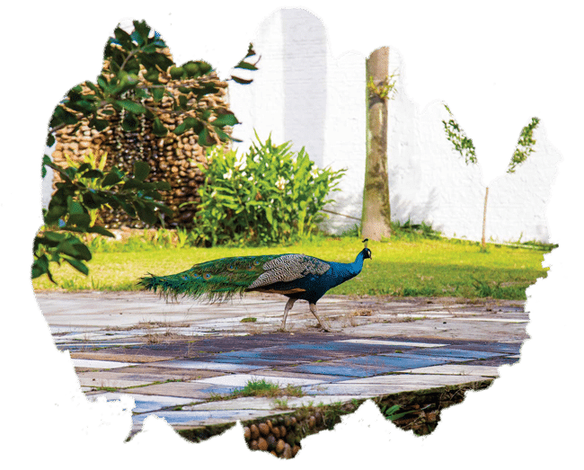Clínica-La-Vittá---Estrutura---pavão